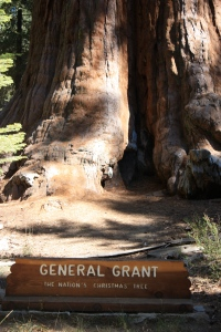 2nd largest tree and sequoia in the world