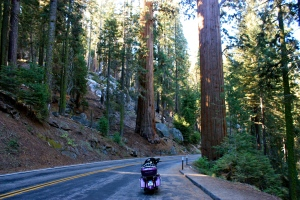 The road winds right through the Giant Forest, the oldest sequoia forest