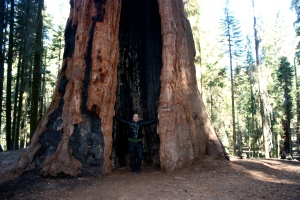 Standing, arms outstretched, inside a giant sequoia